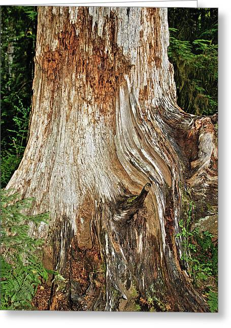 Fragrant Greeting Cards - Trees on the Trails - Olympic National Park WA Greeting Card by Christine Till