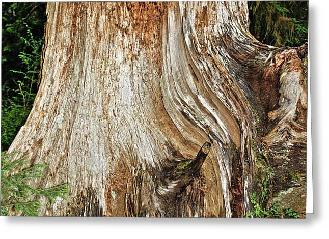 Trees on the Trails - Olympic National Park WA Greeting Card by Christine Till