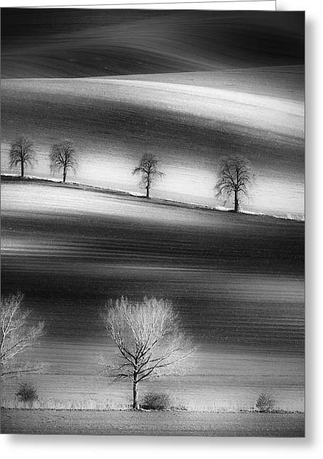 Trees Greeting Card by Piotr Krol (bax)