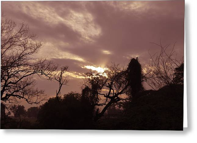 Evironment Greeting Cards - Trees shrubs and sky Greeting Card by Bliss Of Art