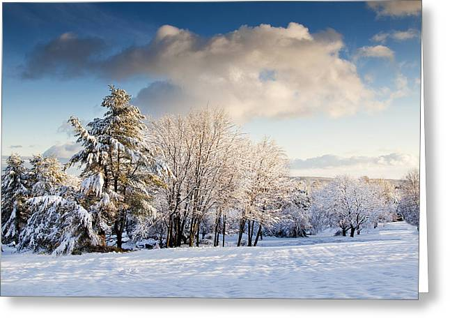 Snow Scene Landscape Greeting Cards - Trees Snow Clouds  Greeting Card by John Hoesly
