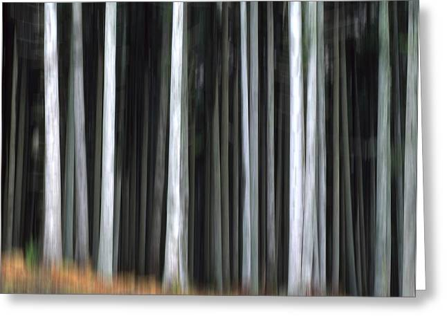 Forestry Greeting Cards - Trees trunks Greeting Card by Bernard Jaubert