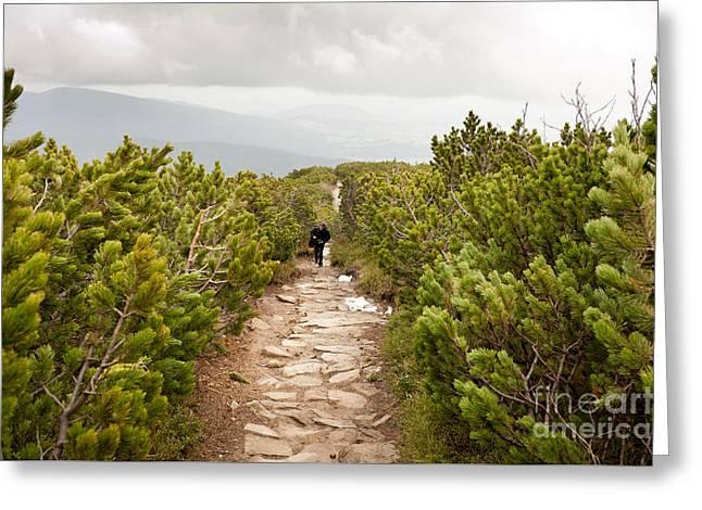 trekking in Pinus mugo Greeting Card by Arletta Cwalina