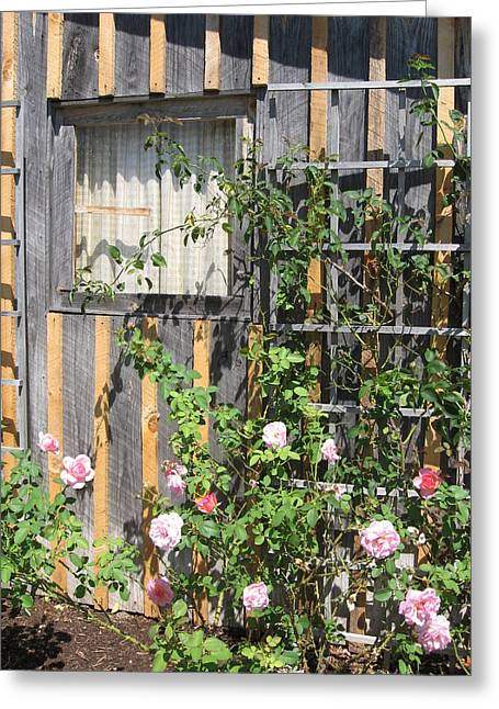 Trellis Greeting Cards - Trellis of Roses Greeting Card by Cathy Germay