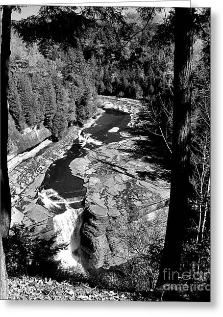 Black Berries Greeting Cards - Trenton Falls Greeting Card by Diane E Berry