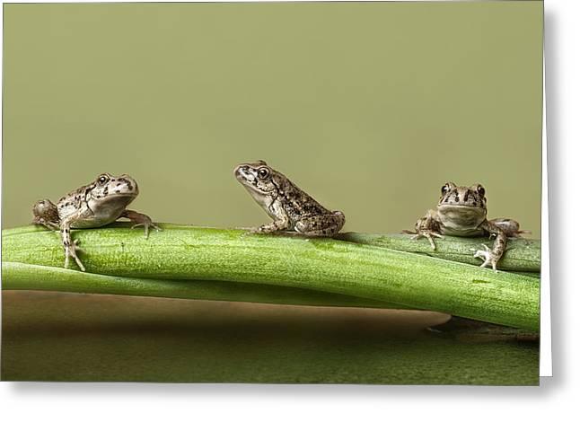 Frog Photographs Greeting Cards - Tres En Rana Greeting Card by Javier Senosiain