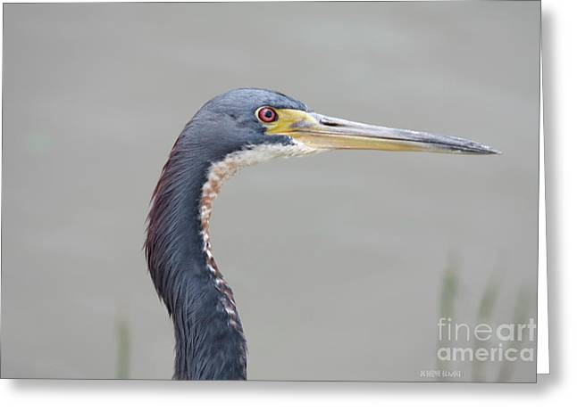 Tri Colored Greeting Cards - Tri Colored Heron Greeting Card by Deborah Benoit