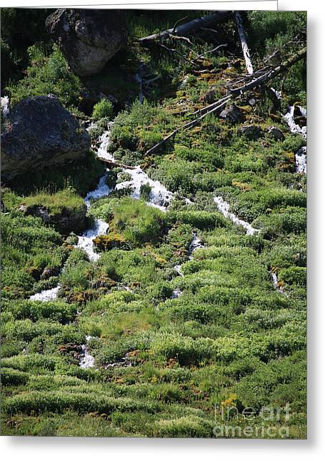 Gallatin River Greeting Cards - Trickling Downhill Greeting Card by Susan Herber