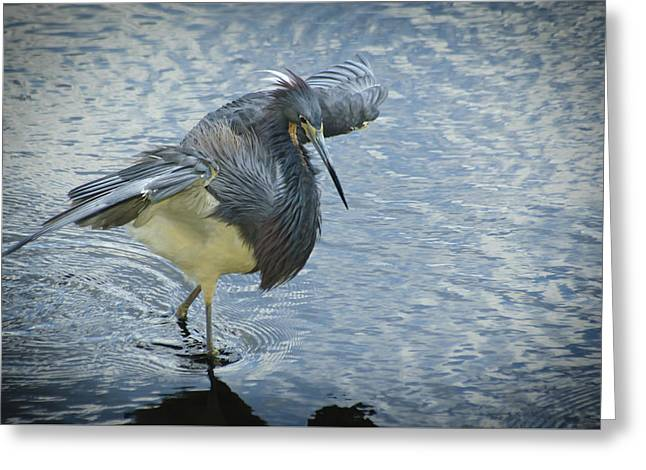 Tricolored Heron Greeting Card by Carolyn Marshall