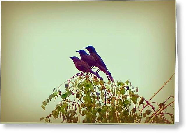 Bird On Tree Mixed Media Greeting Cards - Trio Greeting Card by Lilia D