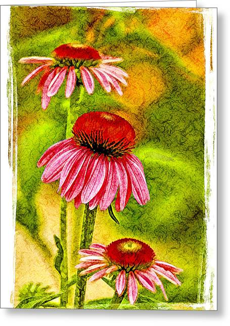 Trio Of Cone Flowers Greeting Card by Geraldine Scull