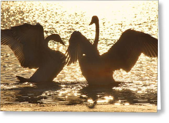 Trumpeter Silhouette Greeting Cards - Trip the Light Fantastic Greeting Card by Leda Robertson