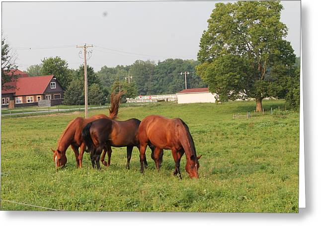Race Horse Greeting Cards - Triples Greeting Card by Minnie Davis