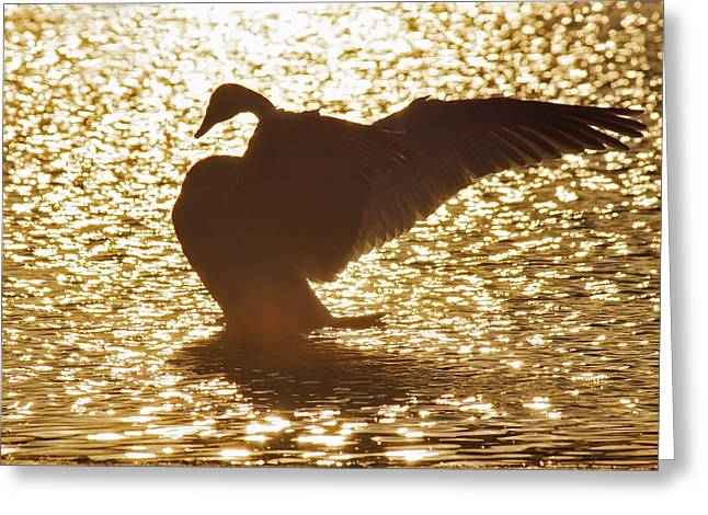 Trumpeter Silhouette Greeting Cards - Triumphant Greeting Card by Leda Robertson
