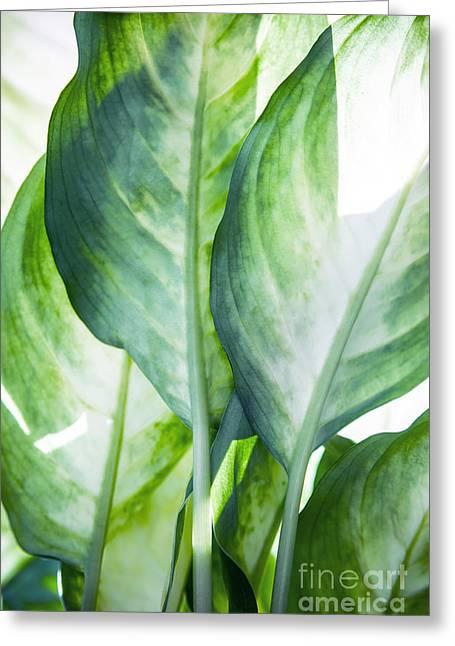 Tropic Abstract  Greeting Card by Mark Ashkenazi