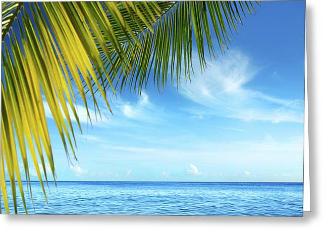 Tropical Beach Greeting Card by Carlos Caetano