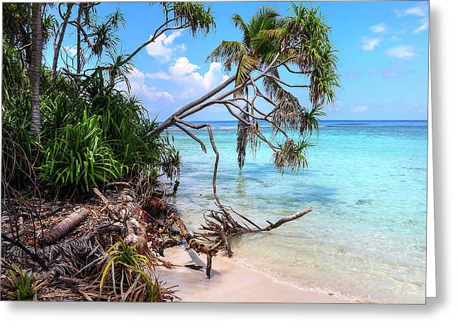 Tropical Beach Greeting Card by Jenny Rainbow