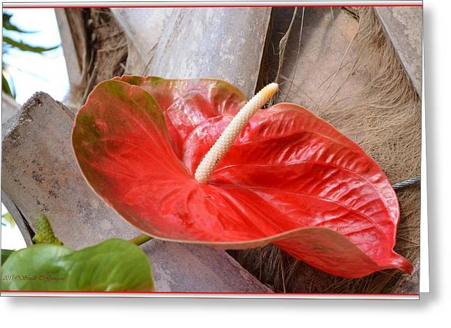 Acrylicprint Greeting Cards - Tropical Beauty Greeting Card by Sonali Gangane