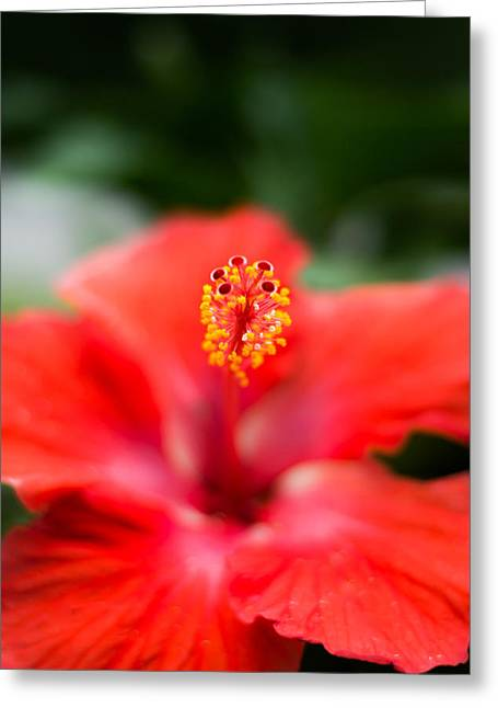 Botanics Greeting Cards - Tropical Blossom Vertical Greeting Card by Shelby  Young