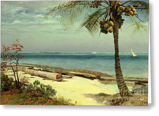 Coconut Palm Tree Greeting Cards - Tropical Coast Greeting Card by Albert Bierstadt