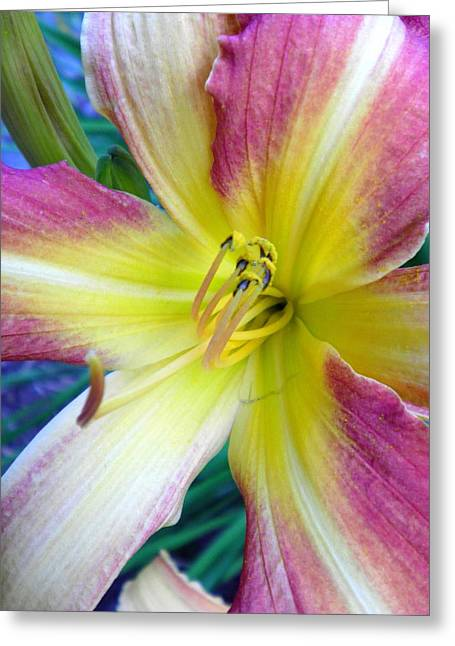 Best Sellers -  - Day Lilly Greeting Cards - Tropical Flame Greeting Card by Donna Meadows
