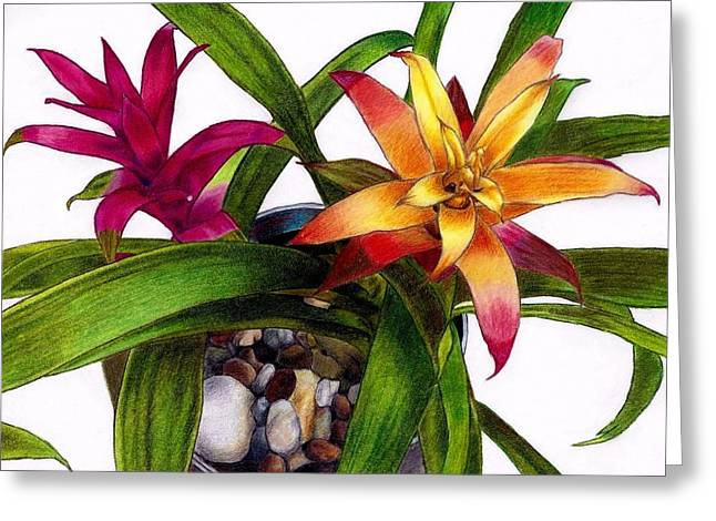 Bromeliad Drawings Greeting Cards - Bromeliads Indoor Flower Greeting Card by Agnieszka Walhof
