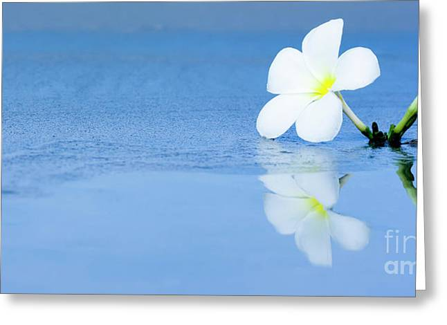 Frangipani Greeting Cards - Tropical flower on the beach Greeting Card by MotHaiBaPhoto Prints