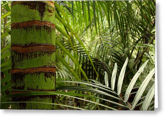 Tropical forest jungle Greeting Card by Les Cunliffe