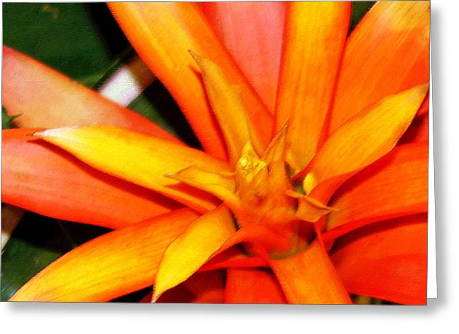 Tropical Orange II Greeting Card by Suzanne Gaff