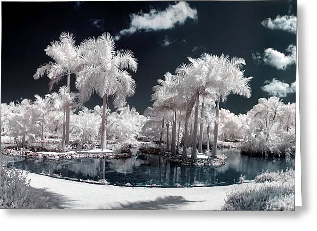 Tropical Paradise Infrared Greeting Card by Adam Romanowicz