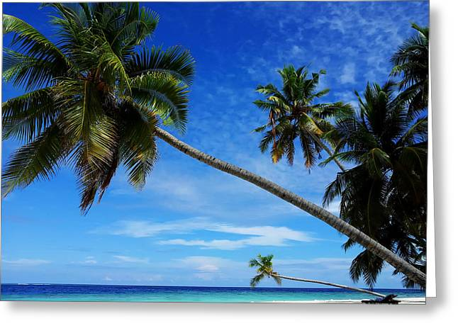 Arabian Sea Greeting Cards - Tropical Perfection Greeting Card by Bernie Fant