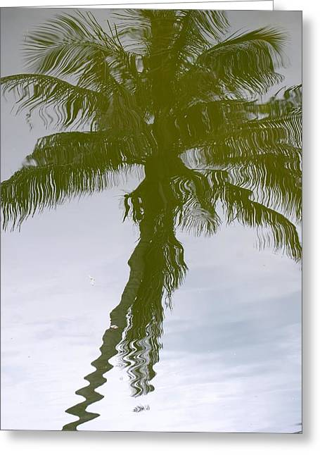 Palm Tree Reflection Greeting Cards - Tropical Reflection Greeting Card by Peter  McIntosh