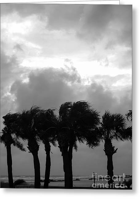 Sunset Prints Greeting Cards - Tropical Stormy Skies Greeting Card by Jennifer White