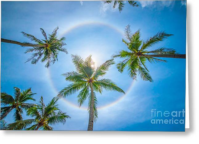 Haze Greeting Cards - Tropical sun halo Greeting Card by Delphimages Photo Creations