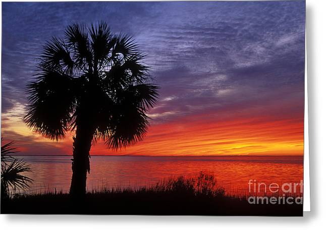 Apalachicola Greeting Cards - Tropical Sunset - FS000214 Greeting Card by Daniel Dempster