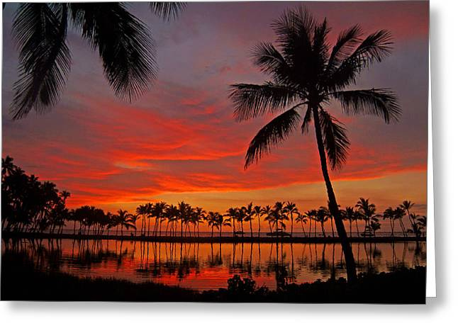 Tropical Sunset Reflections Greeting Card by Jennifer Crites