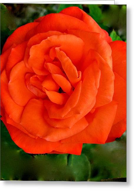 Fancy-full Greeting Cards - Tropicana  Rose Greeting Card by Debra     Vatalaro
