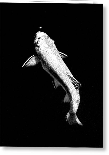 Best Sellers -  - Aquatic Greeting Cards - Trout Rising Greeting Card by Kevin Munro