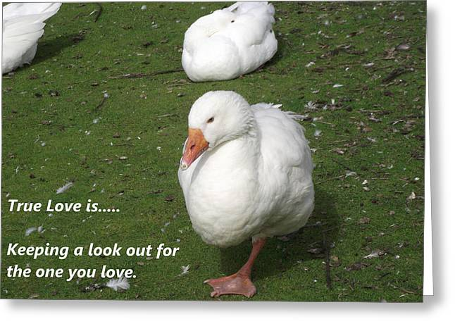 Best Sellers -  - Mother Goose Greeting Cards - True Love 5 Geese Greeting Card by Dawn Hay