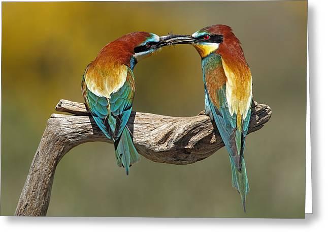 Bee Greeting Cards - True Love Greeting Card by Nicolas Merino