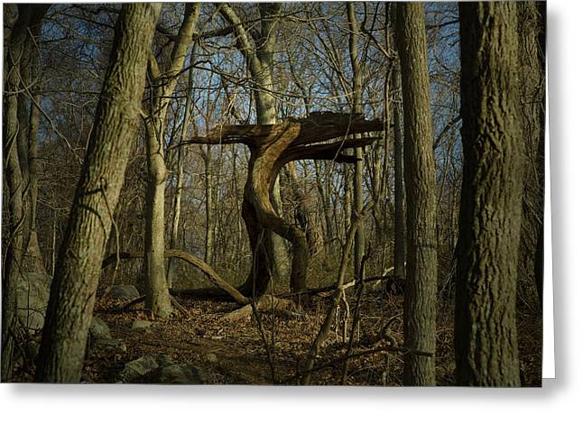 Groton Greeting Cards - Trunk Of An Old Tree Looking Like Greeting Card by Todd Gipstein
