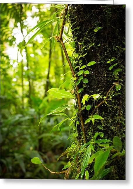 Moss Green Greeting Cards - Trunk of the Jungle Greeting Card by Nicklas Gustafsson