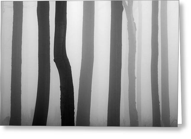 Mist Greeting Cards - Trunks Greeting Card by Martin Rak