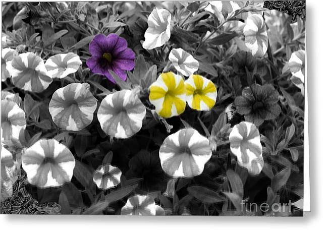 Les Fleurs Greeting Cards - Try a Color Pentunias Greeting Card by Linda Troski