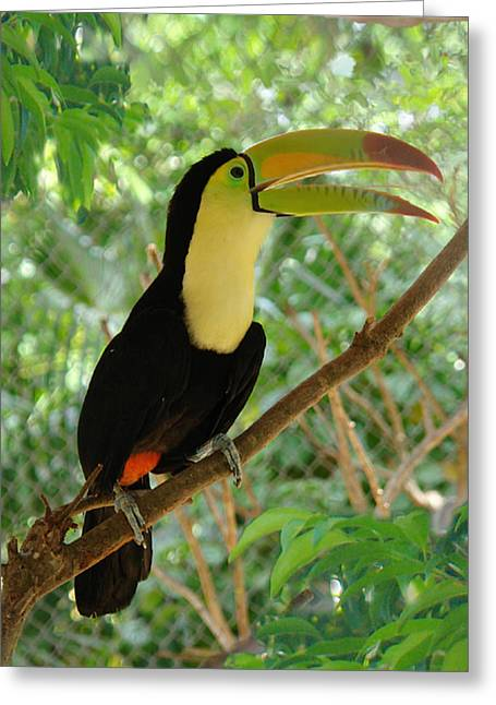 Birds Greeting Cards - Tucan Greeting Card by Angel Ortiz
