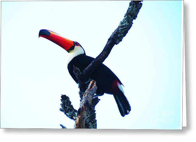 Outdoors Tapestries - Textiles Greeting Cards - Tucano Greeting Card by James Hennis