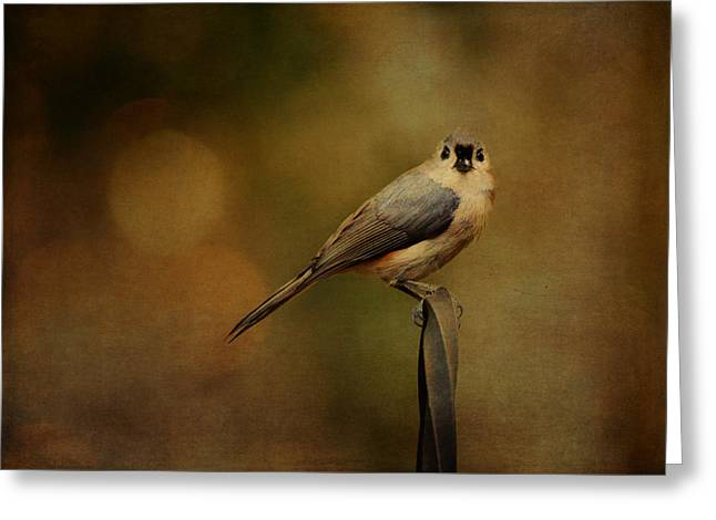 Enhanced Greeting Cards - Tufted Titmouse Greeting Card by Carla Parris