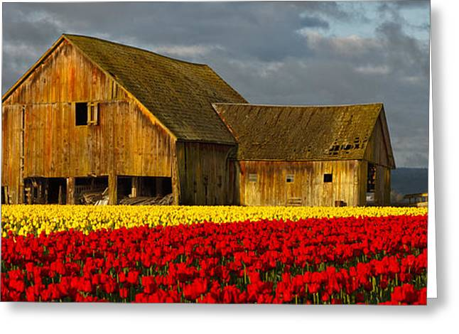 Field. Cloud Greeting Cards - Tulip Barn Greeting Card by Reflective Moment Photography And Digital Art Images