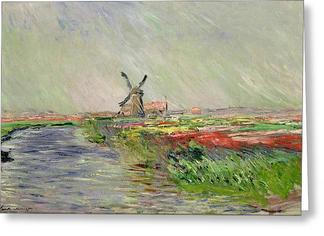 Pants Greeting Cards - Tulip Field in Holland Greeting Card by Claude Monet