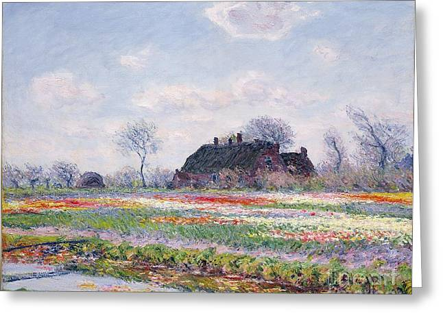 Tulip Fields Greeting Cards - Tulip Fields at Sassenheim Greeting Card by Claude Monet